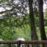 早朝散歩@井の頭公園