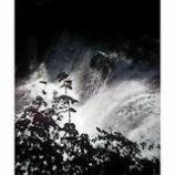 『河津七滝(ななだる)』の画像