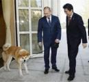 ロシア「フランス警察の犬がコロされたんだって? わかった。子犬を1匹贈ろう。共にテロと戦うのだ」