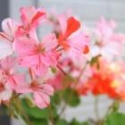 『6月の庭の様子をCANON PowerShot G7X MarkIIで撮った写真で紹介』の画像