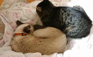 """飼い主のそばで""""暖をとる""""犬猫たち"""