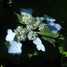 苗場で出会った花達
