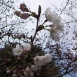 『季節の 移ろい』の画像