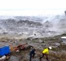 グリーンランド氷床、熱波で「大規模融解」