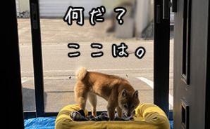 豆柴ぽんと北海道
