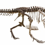 【古報】ティラノサウルス・レックス、羽毛を失っていた