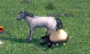 大きさが馬に肉迫する千年物の角ツチブタ