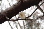 『春』を探して地元の歩き方~見慣れた風景にも春が隠れてます!~