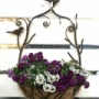 *ガーデンハウスでは鉢バラの葉が沢山出てお花達はモリモリに咲いています♪