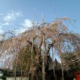『春の浅草』の画像
