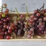 『会社産の葡萄をいただきました~フルールバスケット!大大大収穫~』の画像