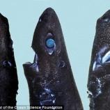 『一池荷葉衣無盡:新種のニンジャ発見』の画像