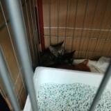 野生化しすぎた子猫達 2017年7月21日のサムネイル