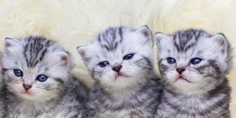 【これは酷い】義実家の猫が5匹も子ども産んだ。どうするかトメに尋ねたら「どこかその辺捨ててくるから~」