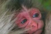 赤ちゃんザルの名前は『クロマグロ』繰り返す『クロマグロ』だ!