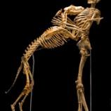 『骨になっても一緒』の画像