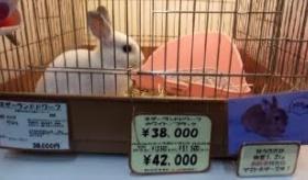 【日本のペット】    日本では うさぎが約4万円で売られているぞ。   海外の反応
