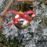 『庭がクリスマス飾りで華やかに! 落葉樹でつくるクリスマスツリー!』の画像