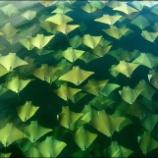 『年に二度、黄金色に染まる海とは』の画像