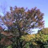 『紅葉が進む後谷公園』の画像