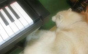 ピアノの音に癒やされて眠るワンコ