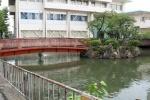 星田会館の裏にある妙音池にはカラフルな鯉さんがたくさんいる!~弁財天様が祀られているところ~
