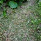 『【ピノ子日記】おいおい、夫よ、何をする?!肥料のやり方人それぞれ』の画像