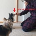 おりこうわんちゃん研究所★2017