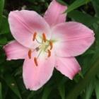 『梅雨の晴れ間に庭の手入れ』の画像