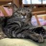 ミッション~猫たちの爪切りを完遂せよ!~