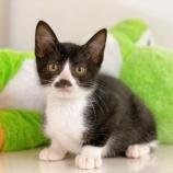 『【子猫】いちごちゃん 里親募集中です』の画像