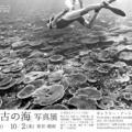 ジュゴンの写真もあります。辺野古基地反対のために、写真家たちが沖縄の海の写真を無償提供したバナーを紹介