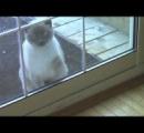【動画】「おうちに入りたい!」ドアをノックする猫