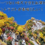 『今、立山の紅葉がとっても見ごろです!今年は赤がとってもキレイ!』の画像