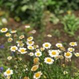 『【朝のご挨拶】心の優しさに出会える街。ぜひ、お花を意識しながら戸田の街を歩いてみてください。市道沿いには地域の方が手入れされる小さな花壇や花の広場が設けられています。』の画像