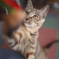 猫の撮り方の本に書かれてた手作りじゃらしを作ってみたよ(●`ω´●)(子猫その112)(猫1544)