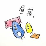 『🐤昼寝🐤』の画像