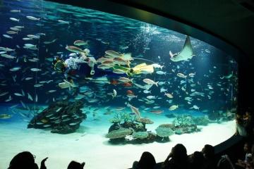 【画像】魚が大量死したサンシャイン水族館の大水槽の悲壮感がすごい