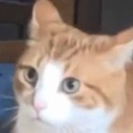 【ネコ】 2匹の同居犬が「猫のぬいぐるみ」で遊んでいた。ヒャッハ~! → それを猫は見てしまったのです…