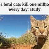 『オーストラリアの猫が食べる野生動物たち』の画像
