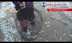 福島県沖のヒラメの数、震災前の8倍に増加