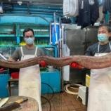 『【香港最新情報】「巨大な海ウナギが出現!街市で騒然」』の画像