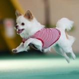 『11月12日開催 【飛行犬写真】が届きました!!』の画像