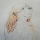 『ホームセンターで買える色えんぴつで描く愛犬・庭の植物』の画像