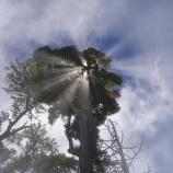 『木漏れ日の虹』の画像