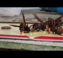 スズメバチの巣を破壊しようと放水したら刺されて死にかけた