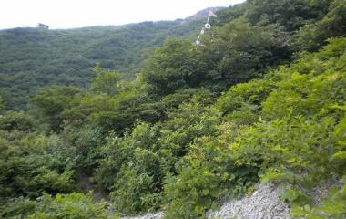 『三鈷峰(1516m)&ユートピア花畑 Ⅱ July.27,(Tue) 2010』の画像