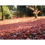 『紅葉の季節』の画像