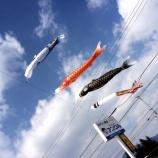 『大空を元気に泳げ鯉のぼり』の画像