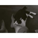 『豊田四郎:猫と庄造と二人のをんな』の画像